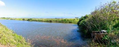 Οι γαρίδες καλλιεργούν εδώ κοντά της Χονολουλού, Oahu, Χαβάη στοκ φωτογραφία