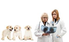 Οι γιατροί φαίνονται ακτηνογραφία Στοκ Εικόνες