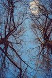 Οι γυμνοί κλάδοι ενάντια στο μπλε ουρανό Στοκ Φωτογραφία