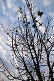 Οι γυμνοί κλάδοι ενός δέντρου ξημερώνουν στον ήλιο Στοκ εικόνα με δικαίωμα ελεύθερης χρήσης