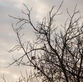 Οι γυμνοί κλάδοι ενός δέντρου ξημερώνουν στον ήλιο Στοκ Εικόνες