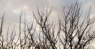 Οι γυμνοί κλάδοι ενός δέντρου ξημερώνουν στον ήλιο Στοκ φωτογραφίες με δικαίωμα ελεύθερης χρήσης