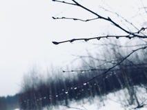 Οι γυμνοί κλάδοι των δέντρων ενάντια στο χειμερινό τοπίο Στοκ Εικόνα