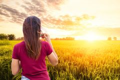 Οι γυναίκες πίνουν τον καφέ στο χρυσό τομέα ρυζιού στοκ εικόνες