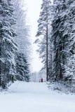 Οι γυναίκες στο χειμερινό δάσος Στοκ Φωτογραφίες