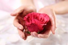 Οι γυναίκες χεριών, αυξήθηκαν περιποίηση λουτρών στοκ φωτογραφίες με δικαίωμα ελεύθερης χρήσης