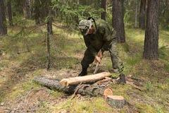 Οι δασικοί επιθεωρητές εργάζονται στο δάσος Στοκ Εικόνες
