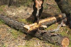 Οι δασικοί επιθεωρητές εργάζονται στο δάσος Στοκ Φωτογραφίες
