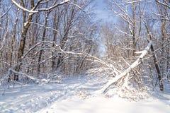 Οι διαδρομές σκι σε ένα ηλιόλουστο χιονώδες χειμερινό δάσος, snowdrifts, χιόνι στο δέντρο διακλαδίζονται, σπασμένος από το δέντρο στοκ εικόνες