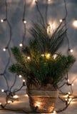 Οι διακοπές Χριστουγέννων, χριστουγεννιάτικο δέντρο χωρίς διακοσμήσεις σε ένα δοχείο στο υπόβαθρο λάμπουν γιρλάντα oprytk στοκ φωτογραφία