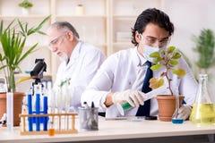Οι δύο φαρμακοποιοί που εργάζονται στο εργαστήριο στοκ φωτογραφία με δικαίωμα ελεύθερης χρήσης