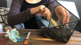 Οι εγκαταστάσεις ανθοκόμων γυναικών succulent στο γεωμετρικό terrarium γυαλιού Κινηματογράφηση σε πρώτο πλάνο φιλμ μικρού μήκους