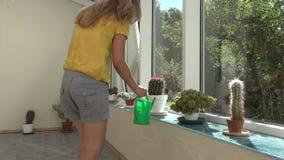 Οι εγκαταστάσεις κάκτων ποτίσματος γυναικών κηπουρών με το πράσινο πότισμα μπορούν στο θερμοκήπιο 4K απόθεμα βίντεο
