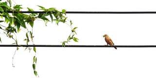 Οι εγκαταστάσεις και λίγο πουλί τρώνε το πράσινο σκουλήκι στο στόμα στο βρώμικο καλώδιο Στοκ Εικόνα