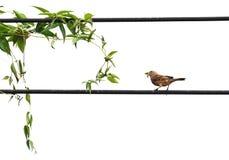 Οι εγκαταστάσεις και λίγο πουλί τρώνε το πράσινο σκουλήκι στο στόμα στο βρώμικο καλώδιο Στοκ φωτογραφία με δικαίωμα ελεύθερης χρήσης