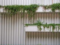 Οι εγκαταστάσεις στον τοίχο Στοκ φωτογραφία με δικαίωμα ελεύθερης χρήσης
