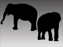 οι ελέφαντες σκιαγραφούν δύο Στοκ Φωτογραφίες