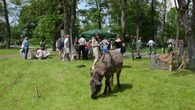 Οι εμπλεγμένοι χαριτωμένοι άνθρωποι ζώων και τουριστών γαιδάρων απολαμβάνουν τα ζώα αγροκτημάτων φιλμ μικρού μήκους