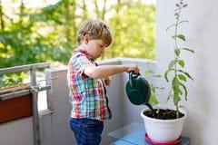 Οι ενεργές εγκαταστάσεις λίγου προσχολικές παιδιών ποτίσματος αγοριών με το νερό μπορούν στο σπίτι στο μπαλκόνι Στοκ εικόνα με δικαίωμα ελεύθερης χρήσης