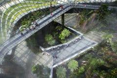 Οι επισκέπτες περπατούν πέρα από τη γέφυρα ουρανού στο αίθριο τροπικών δασών στους κήπους από τον κόλπο στη Σιγκαπούρη Στοκ Φωτογραφία