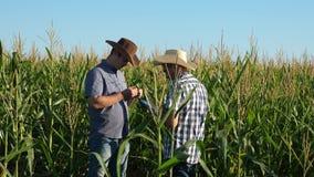 Οι επιχειρηματίες με την ταμπλέτα εξετάζουν τον τομέα τους με το καλαμπόκι Έννοια της γεωργικής επιχείρησης Περίπατοι αγροτών ανθ απόθεμα βίντεο