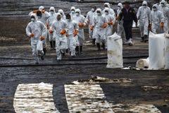 Οι εργαζόμενοι αφαιρούν το αργό πετρέλαιο από μια παραλία Στοκ Φωτογραφία