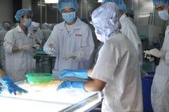 Οι εργαζόμενοι εξετάζουν το χρώμα των καλαμαριών για την εξαγωγή σε ένα εργοστάσιο θαλασσινών στο Βιετνάμ Στοκ Εικόνα