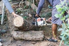 Οι εργαζόμενοι κόβουν το μεγάλο δέντρο από το πριόνι αλυσίδων Στοκ Εικόνες
