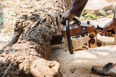 Οι εργαζόμενοι κόβουν το μεγάλο δέντρο από το πριόνι αλυσίδων Στοκ φωτογραφίες με δικαίωμα ελεύθερης χρήσης