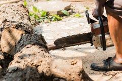 Οι εργαζόμενοι κόβουν το μεγάλο δέντρο από το πριόνι αλυσίδων Στοκ Φωτογραφία