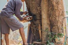 Οι εργαζόμενοι κόβουν το μεγάλο δέντρο από το πριόνι αλυσίδων Στοκ εικόνα με δικαίωμα ελεύθερης χρήσης