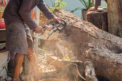 Οι εργαζόμενοι κόβουν το μεγάλο δέντρο από το πριόνι αλυσίδων Στοκ Φωτογραφίες
