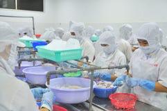 Οι εργαζόμενοι ξεφλουδίζουν τα καλαμάρια για την εξαγωγή σε ένα εργοστάσιο θαλασσινών στο Βιετνάμ Στοκ Φωτογραφία