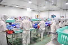 Οι εργαζόμενοι ξεφλουδίζουν τα καλαμάρια για την εξαγωγή σε ένα εργοστάσιο θαλασσινών στο Βιετνάμ Στοκ Εικόνα