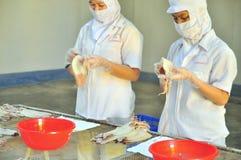 Οι εργαζόμενοι ξεφλουδίζουν τα ξηρά καλαμάρια για την εξαγωγή σε ένα εργοστάσιο θαλασσινών στο Βιετνάμ Στοκ Εικόνες