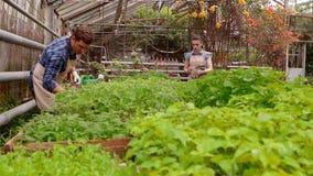 Οι εργαζόμενοι στο θερμοκήπιο, γεωπόνος γυναικών με επιθεωρημένα τα ταμπλέτα σπορόφυτα, κηπουρός ανδρών ποτίζουν τις εγκαταστάσει φιλμ μικρού μήκους