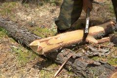 Οι εργασίες δασοφυλάκων στα ξύλα Στοκ φωτογραφία με δικαίωμα ελεύθερης χρήσης