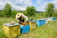 Οι εργασίες μελισσοκόμων για ένα μελισσουργείο aphrodisiac Στοκ Εικόνες