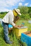 Οι εργασίες μελισσοκόμων για ένα μελισσουργείο aphrodisiac Στοκ Εικόνα