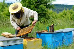 Οι εργασίες μελισσοκόμων για ένα μελισσουργείο aphrodisiac Στοκ φωτογραφίες με δικαίωμα ελεύθερης χρήσης