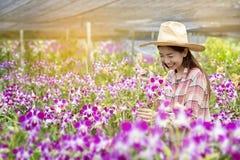 Οι ευτυχείς θηλυκοί αγρότες συγκομίζουν τα λουλούδια ορχιδεών για την πώληση Όμορφη γυναίκα που εργάζεται στο αγρόκτημα ορχιδεών  στοκ εικόνες