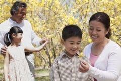 Οι ευτυχείς, χαμογελώντας παππούδες και γιαγιάδες και τα εγγόνια στο πάρκο στην άνοιξη που εξετάζει το λουλούδι ανθίζουν Στοκ Φωτογραφία