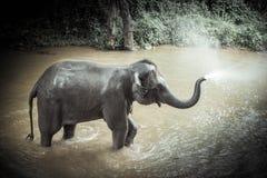 Οι ελέφαντες λουσίματος στον ελέφαντα της Mae Sa στρατοπεδεύουν, πλαίσιο της Mae, Chiang Mai Στοκ Φωτογραφία