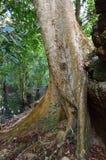 Οι ζούγκλες κοντά σε Angkor Wat σύνθετο, Siem συγκεντρώνουν, Καμπότζη Στοκ Εικόνα