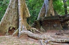 Οι ζούγκλες κοντά σε Angkor Wat σύνθετο, Siem συγκεντρώνουν, Καμπότζη Στοκ Φωτογραφία