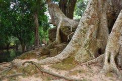 Οι ζούγκλες κοντά σε Angkor Wat σύνθετο, Siem συγκεντρώνουν, Καμπότζη Στοκ φωτογραφία με δικαίωμα ελεύθερης χρήσης