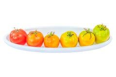 Οι ζωηρόχρωμες ντομάτες απομονώνουν το άσπρο υπόβαθρο με το ψαλίδισμα της πορείας στοκ φωτογραφία