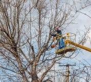 Οι ηλεκτρολόγοι καθαρίζουν ηλεκτρικό wires do tree στοκ εικόνα