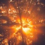 Οι ηλιαχτίδες μέσω του δέντρου το πρωί θολώνουν λεπτομέρειες Στοκ Εικόνες