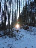 Οι ηλιαχτίδες που προκαλούν το φακό καίγονται, λάμποντας μέσω της στενής στάσης, λεπτά, ψηλά δέντρα στα βουνά Untersberg, Άλπεις, Στοκ Εικόνες